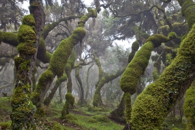 Bale mountains NP